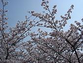 09‧春‧筑波櫻花筆記:DSC00560.JPG