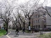 09‧春‧筑波櫻花筆記:DSC00594.JPG