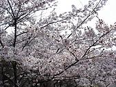 09‧春‧筑波櫻花筆記:DSC00551.JPG