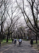 09‧春‧筑波櫻花筆記:DSC00591.JPG