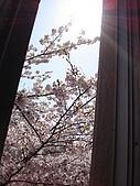 09‧春‧筑波櫻花筆記:DSC00612.JPG
