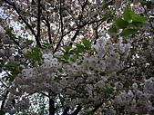 東京‧090412‧上野‧神保町:090412 東京国立博物館‧みどりの桜