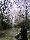 09‧春‧筑波櫻花筆記:TS3I0308.JPG