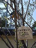 追逐J字標記:090407 奈良市観光特別大使記念樹