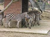 台北市立動物園:DSCN0951