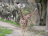 台北市立動物園:DSCN0952