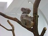 台北市立動物園:DSCN0986