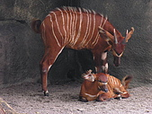 台北市立動物園:DSCN0945