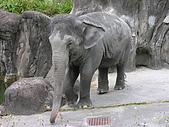 台北市立動物園:DSCN0905