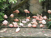 台北市立動物園:DSCN0914