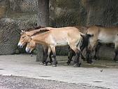 台北市立動物園:DSCN0934