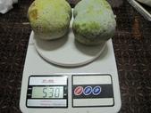 白柿:IMG_4415.jpg