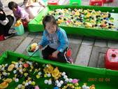 台中豐樂公園釣鴨:DSCN8621