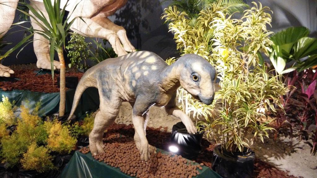 IMG_20160128_153638_BURST1.jpg - 會動的恐龍展