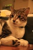 極簡咖啡的貓:1766403412.jpg