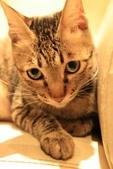 極簡咖啡的貓:1766403413.jpg