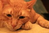 極簡咖啡的貓:1766403416.jpg