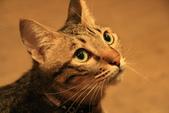 極簡咖啡的貓:1766403414.jpg