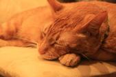 極簡咖啡的貓:1766403415.jpg