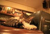 極簡咖啡的貓:1766403417.jpg