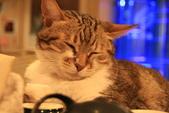 極簡咖啡的貓:1766403418.jpg