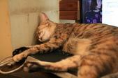 極簡咖啡的貓:1766403406.jpg