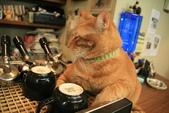 極簡咖啡的貓:1766403407.jpg