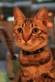 極簡咖啡的貓:1766403409.jpg