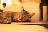 極簡咖啡的貓:1766403410.jpg