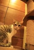 極簡咖啡的貓:1766403411.jpg