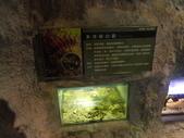 20130107台北基隆一日遊:20130107台北基隆一日遊台北木柵動物園 (57).JPG