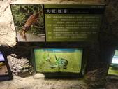 20130107台北基隆一日遊:20130107台北基隆一日遊台北木柵動物園 (59).JPG