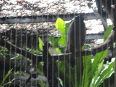 20130107台北基隆一日遊:20130107台北基隆一日遊台北木柵動物園 (6).JPG