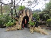20130107台北基隆一日遊:20130107台北基隆一日遊台北木柵動物園 (8).JPG