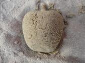 Q寶貝.軒寶貝到外婆家度假:101711寶貝Q在廣豐公園內沙坑玩沙蘋果 (2).JPG