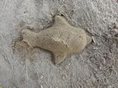 Q寶貝.軒寶貝到外婆家度假:101711寶貝Q在廣豐公園內沙坑玩沙魚 (2).JPG