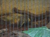 20130107台北基隆一日遊:20130107台北基隆一日遊台北木柵動物園 (12).JPG