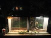 20130107台北基隆一日遊:20130107台北基隆一日遊台北木柵動物園 (43).JPG