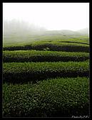 20080405 八卦茶園:P4052066-1.JPG