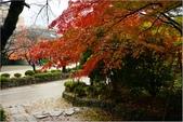 20131121-25日本黑部立山.金澤:DSC_0801.JPG