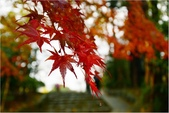 20131121-25日本黑部立山.金澤:DSC_0800.JPG