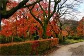 20131121-25日本黑部立山.金澤:DSC_0803.JPG