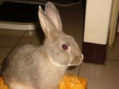 兔子:P1110806.JPG