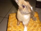 兔子:P1110801.JPG