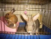 兔子:P1110795.JPG
