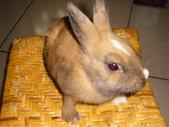 兔子:P1110800.JPG