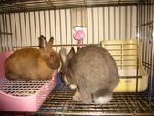 兔子:P1110790.JPG