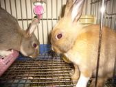 兔子:P1110791.JPG
