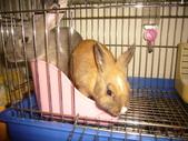 兔子:P1110796.JPG
