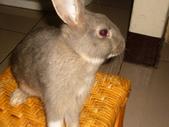兔子:P1110807.JPG